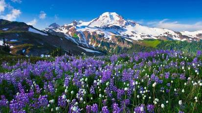183358-mountain-flowers-snow-landscape-748x421